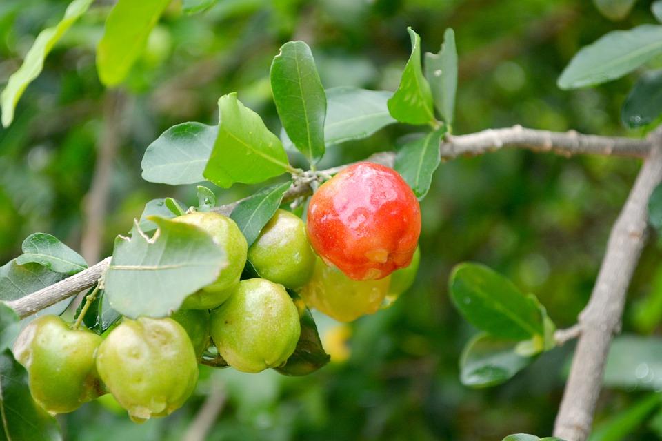 frutas-553098_960_720