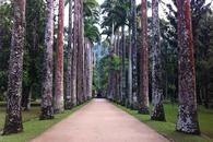 Thumbnail for Explore Rio's Beautiful Botanical Garden